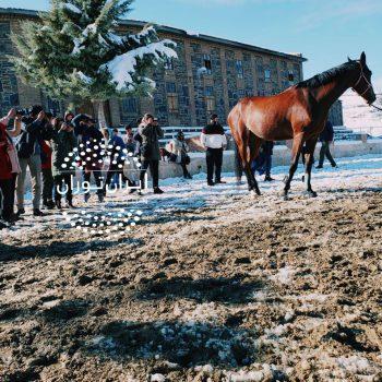 ورکشاپ عکاسی از اسب