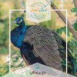 مسابقه عکاسی باغ پرندگان